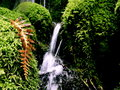 Oregon waterfall with nearby fall fern moss covered rocks split by brownish orange Royalty Free Stock Images