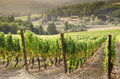 Oregon wine country Stock Images