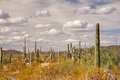 Organ Pipe Cactus National Monument, Arizona, USA Stock Images