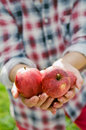 Organic apples hands holding fresh Stock Photos