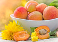 Organic apricots in bowl on a table Stock Image