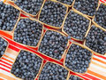 Organic blue berries for sale at market. Royalty Free Stock Photo
