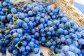 Organic blue grapes at a Farmer`s Market Royalty Free Stock Photo