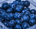 Organic Blueberry Fresh Royalty Free Stock Photo