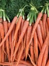 Organic carrots for sale at a farmers market Royalty Free Stock Photo
