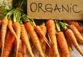 Organic , real vegetables : carrots Royalty Free Stock Photo