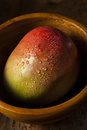 Organic Colorful Ripe Mangos Stock Images