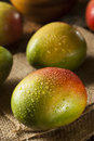 Organic colorful ripe mangos on a background Royalty Free Stock Photography