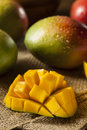 Organic colorful ripe mangos on a background Stock Images