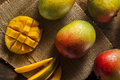 Organic colorful ripe mangos on a background Stock Image