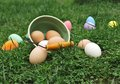 Organic eggs scattered on grass colored and green bucket green Royalty Free Stock Photo