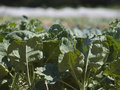 Organic farm Stock Images