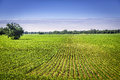 Organic farm land with rows green Royalty Free Stock Images