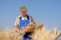 Organic farmer standing in a wheat field looking at the crop model is real farm worker Stock Photo
