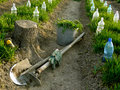 Organic farming vegetable beds with plastic bottles as small hothouses among growing wheat as green manure and some garden tools Stock Images