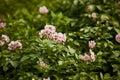 Organic Flowers