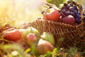 Organic fruit in summer grass Stock Photo