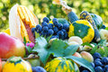 Organic fruits and vegetables organicd of summer fall Royalty Free Stock Images
