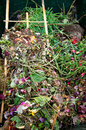 Organic garden waste ready for compost Stock Photo