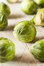 Organic green brussel sprouts ready to cook Royalty Free Stock Photos