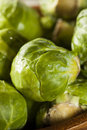 Organic green brussel sprouts ready to cook Royalty Free Stock Image