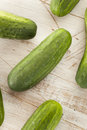 Organic green pickle cucumbers used for pickling Stock Photography