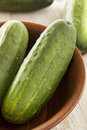 Organic green pickle cucumbers used for pickling Stock Image