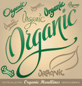 Organic headlines, hand lettering set (vector) Royalty Free Stock Image