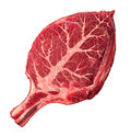 Organic meat and natural food as a raw steak in the shape of a green leaf as a symbol for responsible agriculture and grass fed Stock Images
