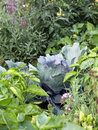 Organic mixed vegetables on the vegetable garden bed