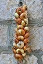 Organic onion braid hanging on the wall Stock Image