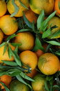 Organic oranges Royalty Free Stock Photo
