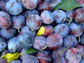 Organic plums Royalty Free Stock Images