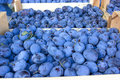 Organic plums - damson Royalty Free Stock Photos