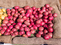 Organic potatos pile of small for sale at local farmers market Royalty Free Stock Photography