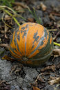 Organic pumpkin Stock Images