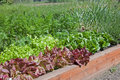 Organic Raised Bed Lettuce Garden Royalty Free Stock Photos