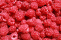 Organic raspberries Stock Photos