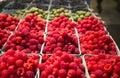Organic raspberries at framer s market Stock Image