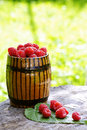 Organic raspberries grown in the forest Stock Photography