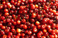 Organic Red Cherries Stock Images