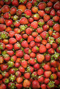 Organic red strawberries floating in water washed cleaned Stock Photos