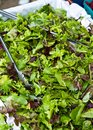 Organic Salad Mix Royalty Free Stock Photography