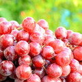Organic seedless grapes big red grape fresh from orchard Royalty Free Stock Images