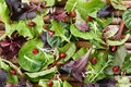 Organic Spring Mix Lettuce Stock Photo