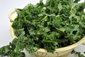 Organic tender leaf curly kale Stock Photos