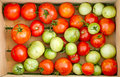 Organic tomatoes in a crate Royalty Free Stock Photo