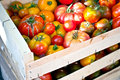 Organic tomatoes wooden crate full of in different sizes shapes and colors Stock Image