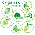 Organic tropical fruits green on white background Stock Photos