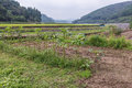 Organic vegetable farm of japanese farmer Royalty Free Stock Photo